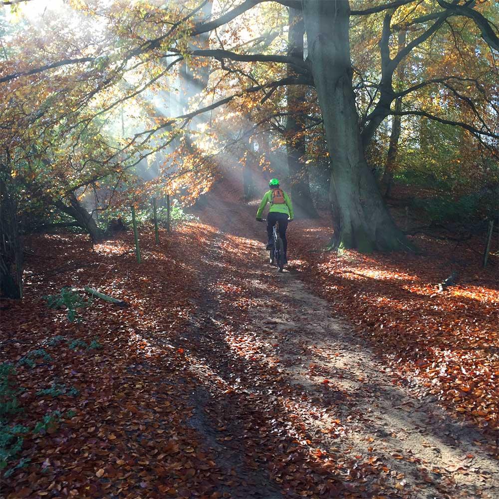Sunlight on Wolverns Lane